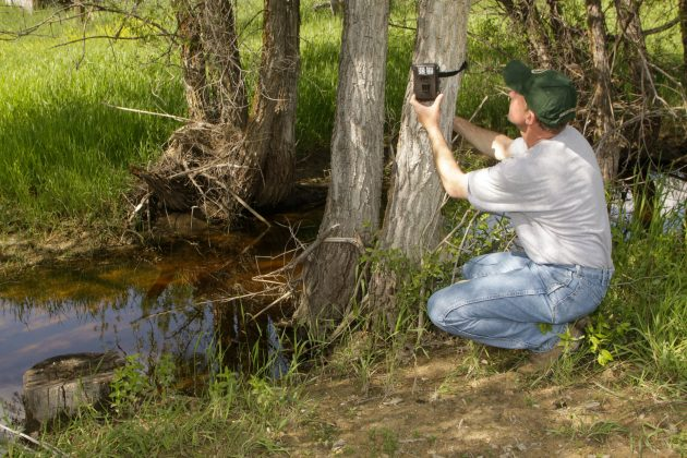 SW375, Setting up trail cameras for scouting, copyright Mark Kayser 6-30-16