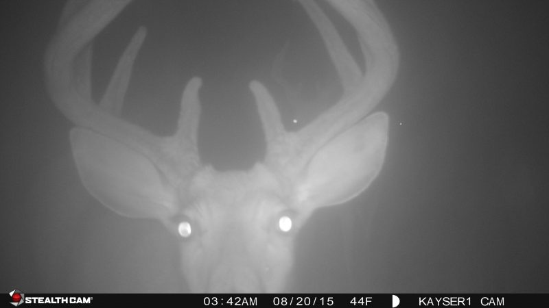 Don't check your cameras too often or deer will pattern you and become nocturnal.
