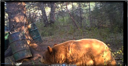 This is the bear that has kept me awake at night for more than a year. The hunt is still on.