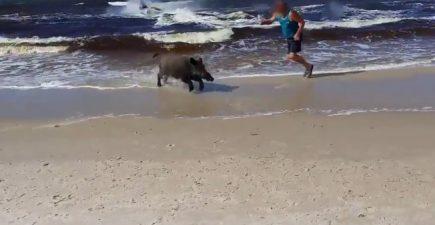 Boar Beach 7-22-16