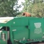Garbage Bear 7-28-16