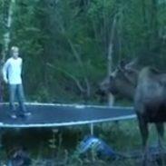 Trampoline Moose 7-29-16
