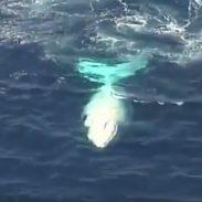 White Whale 7-29-16