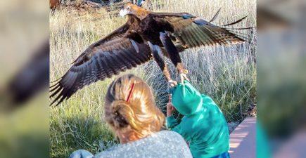 eaglegrab715