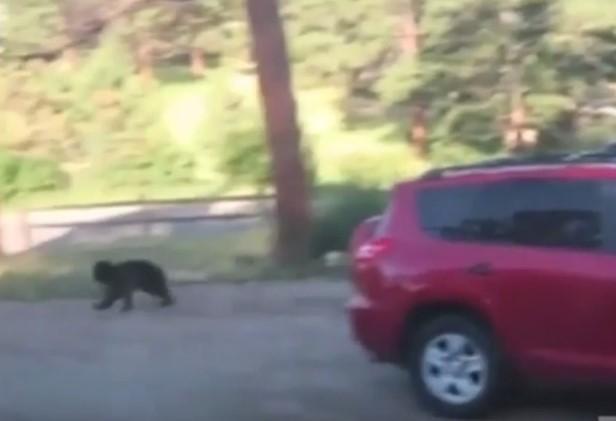 Video Bear Break In Totals Suv Outdoorhub