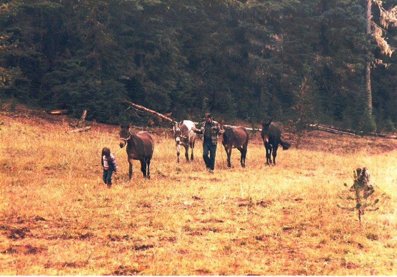Leading Bullet with Dad and mules.