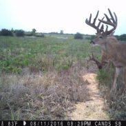 two stud bucks 8-29-16