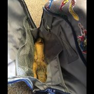 BackPackSquirrel