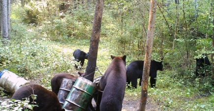 Scouting cameras showed multiple bears hitting the bait all day long, so the author went in with plenty of optimism. He figured that he'd end up shooting a good-sized color-phase bear.