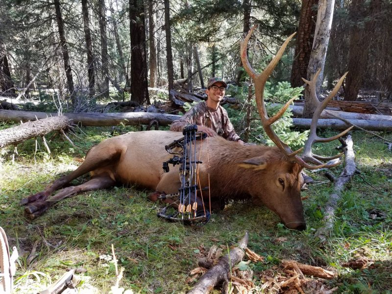 Magnus Stinger Buzzcuts are a great choice for all big game. Check out this recent photo from Tomas Trujillo with a bull elk taken with a Buzzcut.