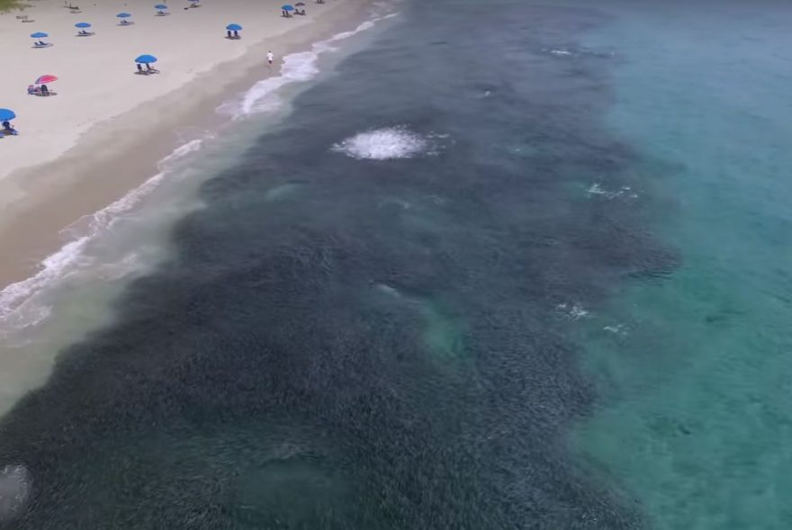 Video amazing drone footage captures florida mullet run for Mullet fish florida