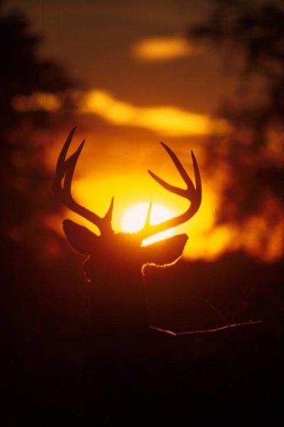 Image courtesy of Ohio Division of Wildlife