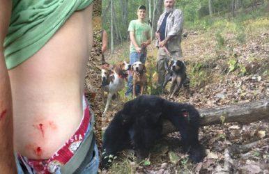 bear-attack2