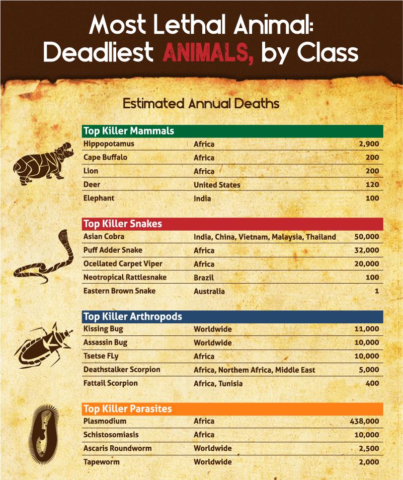 Image Courtesy - https://latestcasinobonuses.com/man-vs-beast