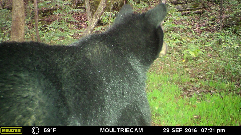 blackbearkentucky
