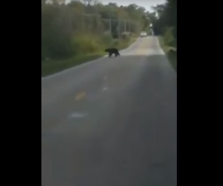 First Black Bear Sighting Caught on Film in Ohio