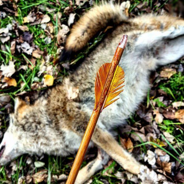 bloody-arrow Beka Garris