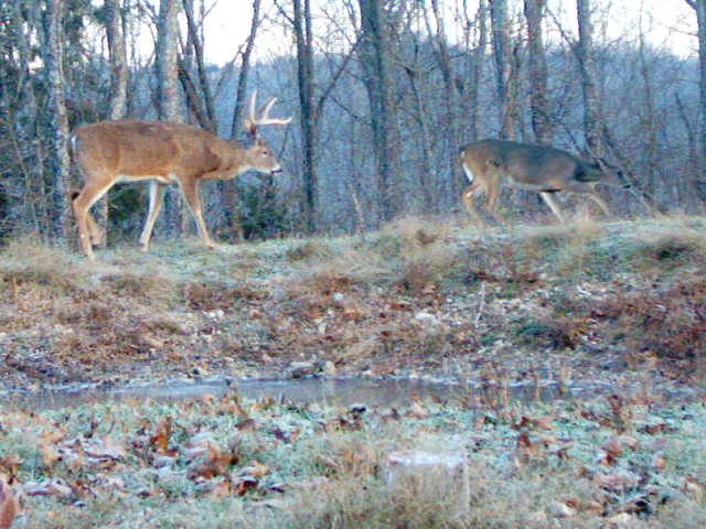 During the lock down phases of the rut, a buck tending a hot doe moves only when the doe moves.