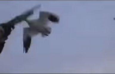 Goose Hunter Smacks Down Goose
