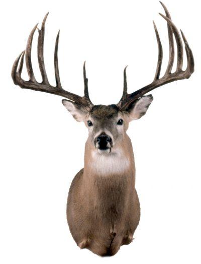 The Milo Hanson buck
