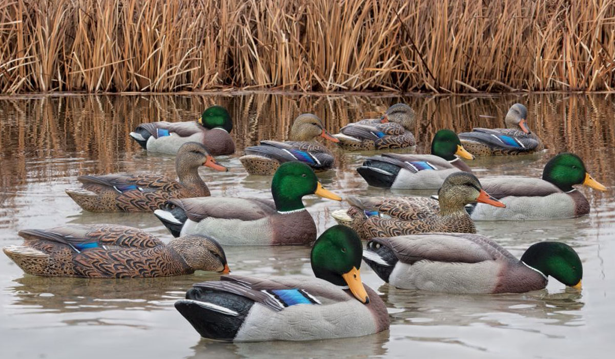 Avian X Top Flight Mallard Duck Decoys 12 Pack Outdoorhub