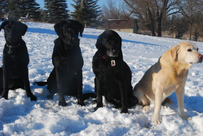 When all of Deb's girls were together. Left to right: Justice, Jerzee, Jesse and Tera.