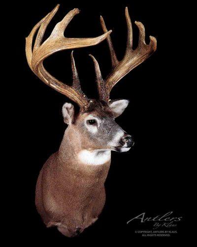 The Jordan buck