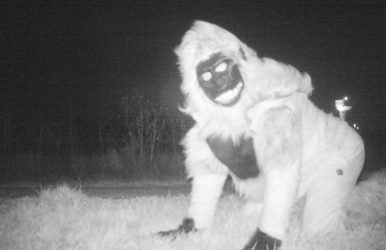 Police set up trail camera to find mountain lion get weird surprise instead