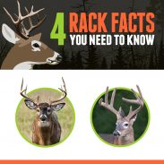 Four rack facts updated 11-4-16