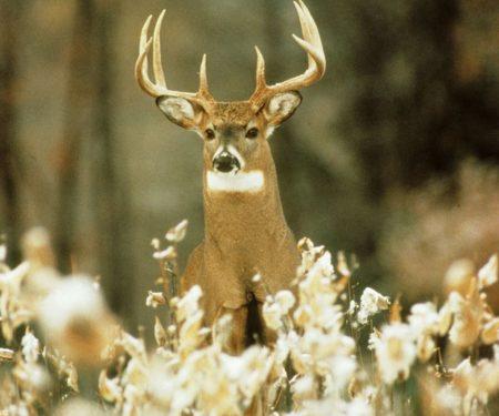 Wisconsin Deer Harvest Summary