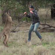 Man Punches Kangaroo to save his dog