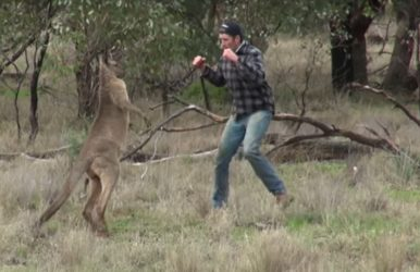 Man Punches Kangaroo to save his dog