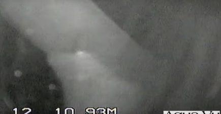 sturgeon-underwater-video-screenshot