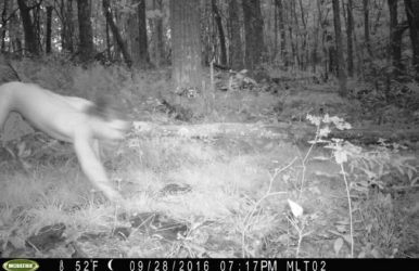 Trailcam Captures Naked man
