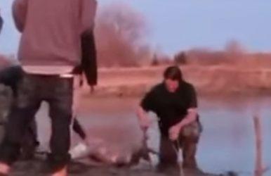Disgusting Poachers