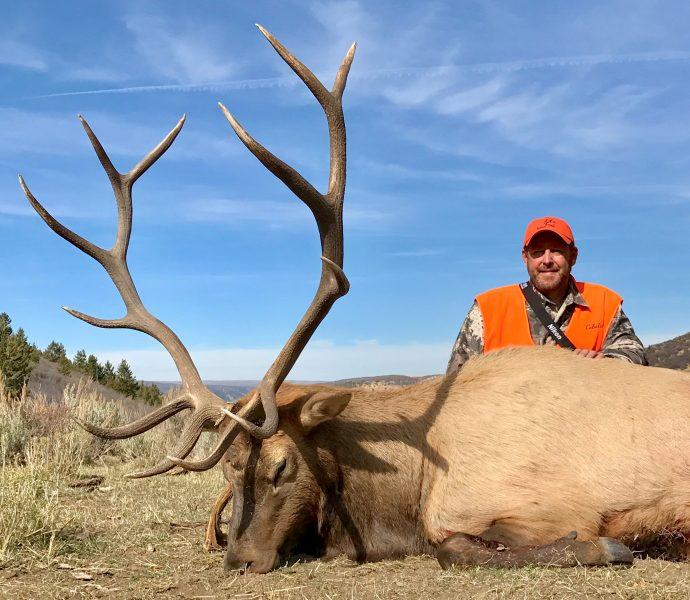 The author's Colorado herd bull.