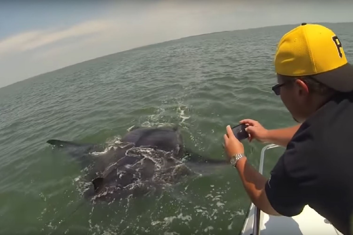 Video fishermen come across car sized manta ray off for Fish camp hilton head