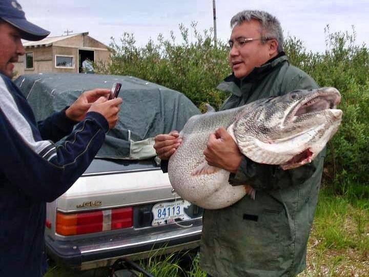 the Lake Record  83-Pound that World Would've Trout Smashed
