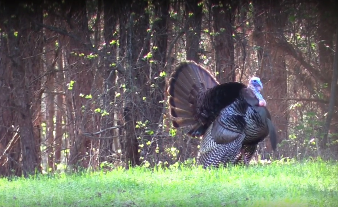 Video Romantic Turkey Dances For His Hot Date  Outdoorhub-2073