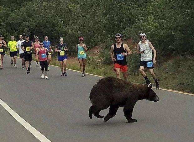 BearRace
