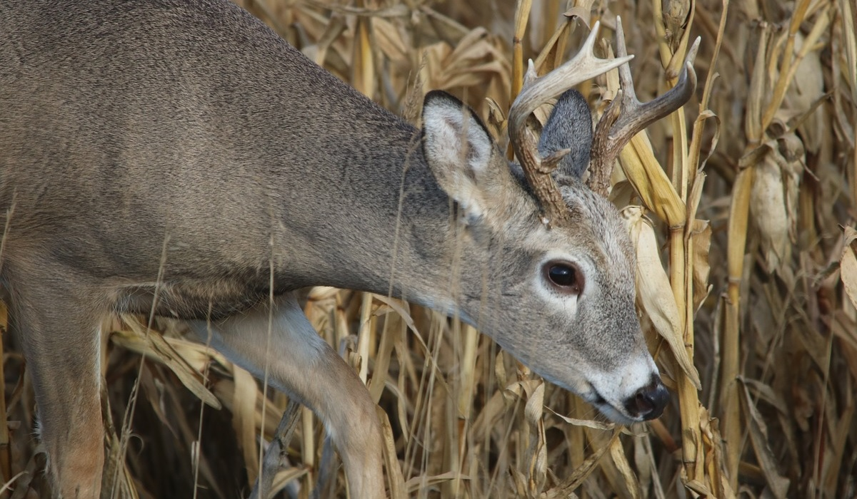 deer hunting is a good thing essay Some things i've learned about deer hunting by john sloan i guess after 57 years of hunting deer, one would expect that i would learn a few things.