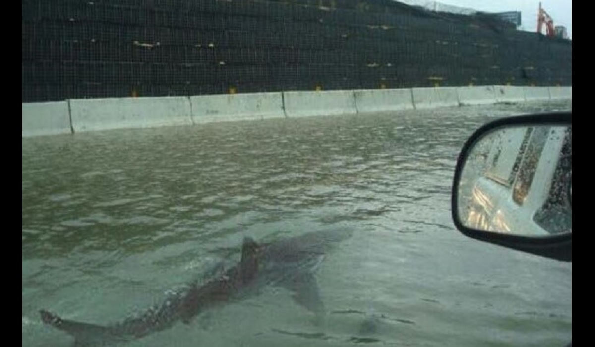 Are sharks and alligators swimming the streets of Houston?