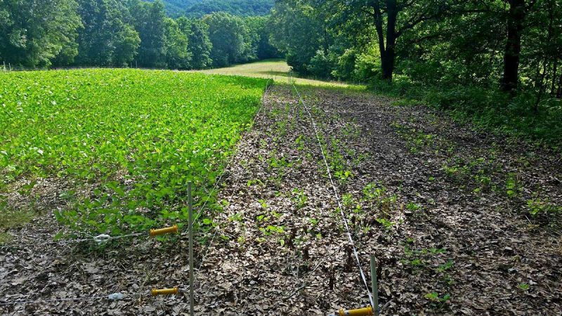 Whitetail wednesday creating food plot bottlenecks with