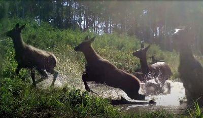 Elk Pool Party