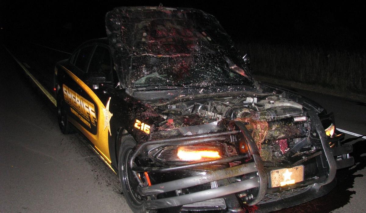 How Can Deer Survive Car Crash