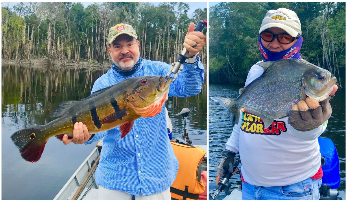 Freshwater fishing heaven brazil peacock bass more for Fisher fish chicken indianapolis in