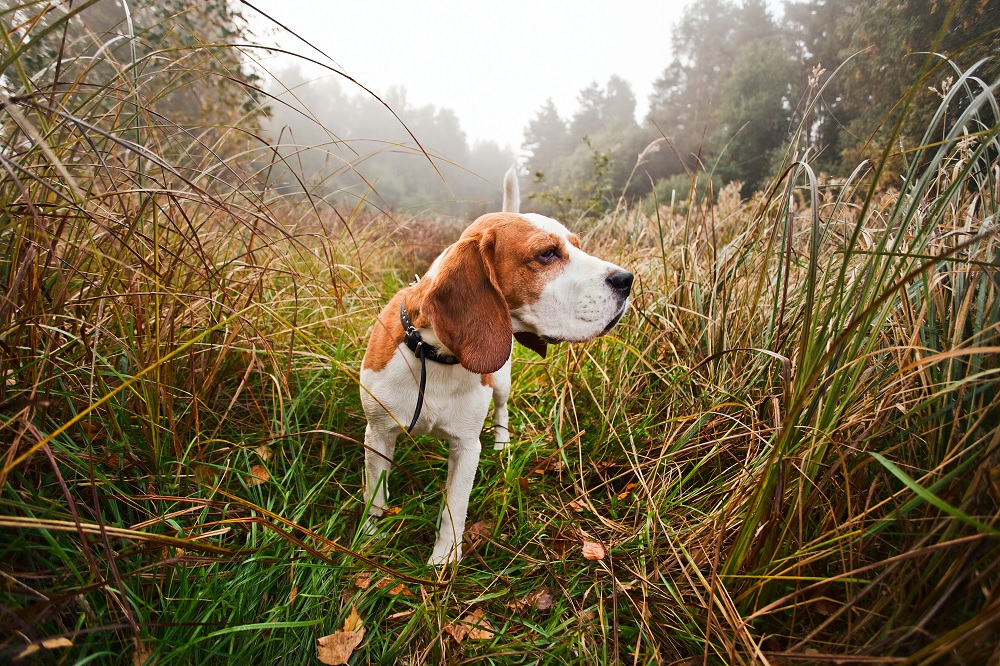 The 5 Best Hunting Dog Breeds