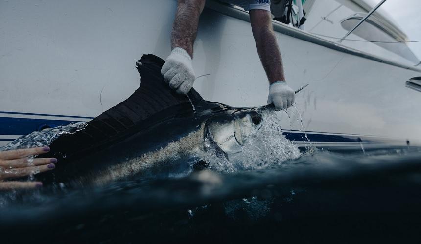 Billfish Love Story
