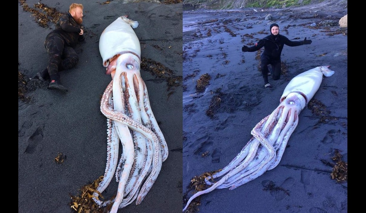 trio of brothers discover giant squid washed up on a new zealand beach