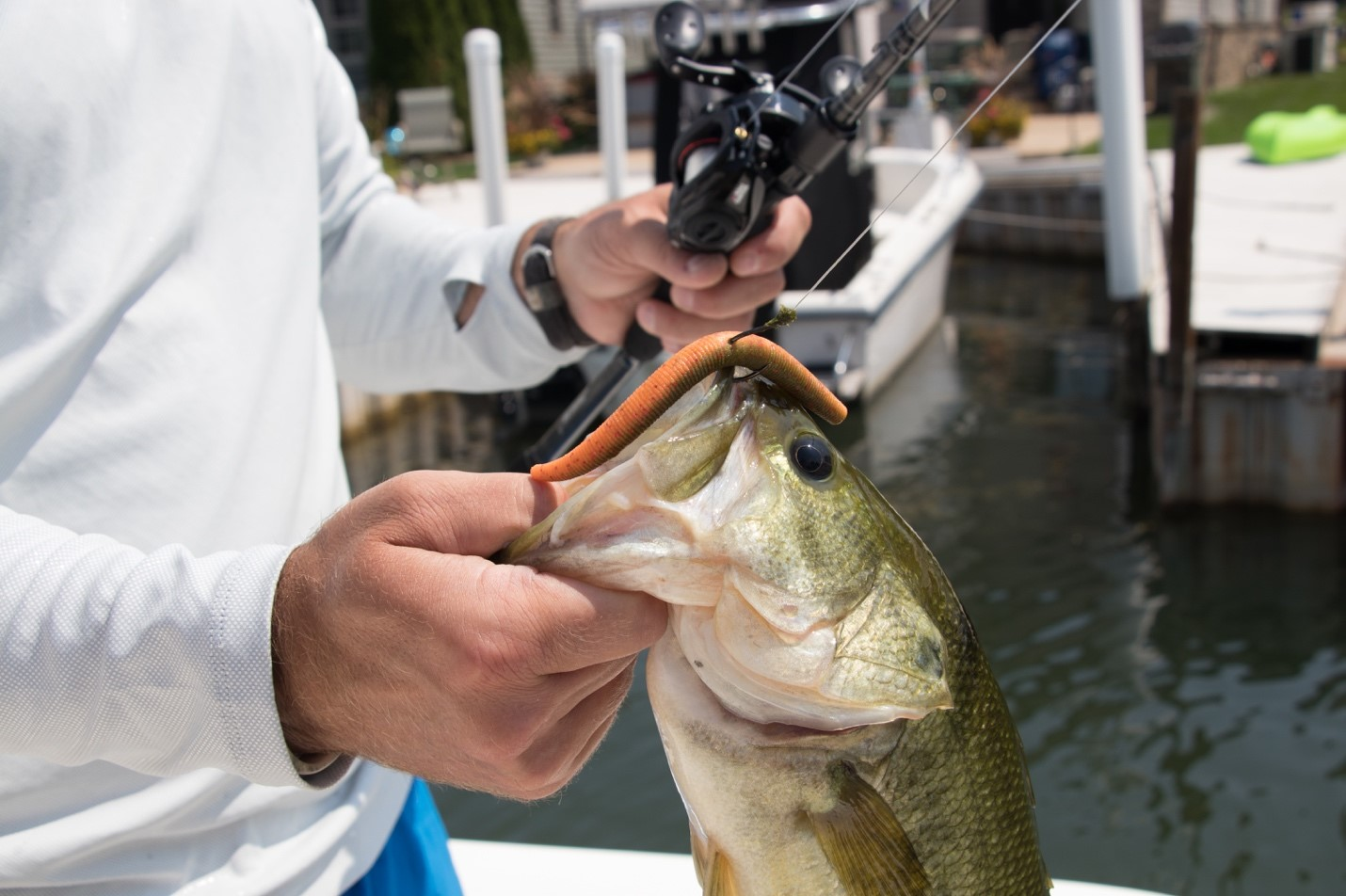 Summer Bass Fishing Techniques